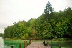 在湖附近的绿色森林 免版税图库摄影