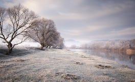 在湖附近的冻草甸有树的在11月下旬 免版税库存图片