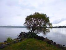 在湖陶波,陶波新西兰的树 免版税库存照片