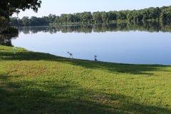 在湖,瓦尔登湖湖的鸟 免版税图库摄影