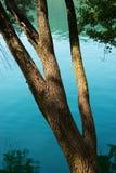 在湖水的树干 库存图片