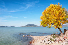在湖Balaton,匈牙利的秋天结构树 免版税库存照片