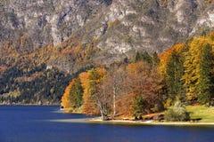 在湖Bohinj的晴朗的秋天天,斯洛文尼亚 免版税库存图片