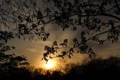 在湖Ellyn的日落 库存照片