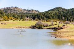 在湖karagol高原在Tarakli附近,萨卡里亚的树 卡拉克 库存图片