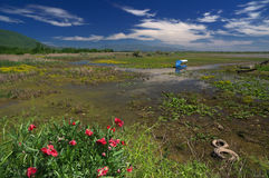 在湖Kerkini,希腊海岸的鸦片  免版税库存照片