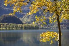 在湖Kochelsee,德国的秋天 图库摄影