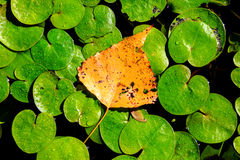 在湖leafage的秋天叶子 免版税库存图片