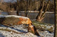 在湖Raminac的冬天日落 免版税库存图片