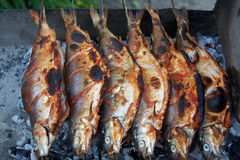 在湖Sevan的淡水白鲑Coregonus lavaretus 库存图片