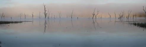 在湖Tinaroo的桃红色黎明 图库摄影