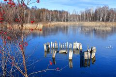 在湖Uvildy在晴朗的秋天天车里雅宾斯克地区,俄罗斯清楚的冰背景的花揪红色平凡  库存照片
