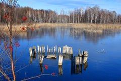 在湖Uvildy清楚的冰背景的花揪红色平凡在晴朗的秋天天 图库摄影