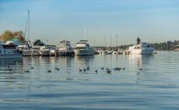 在湖Washingon的小船 库存照片