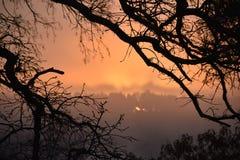 在湖Winnsboro的雾在东部得克萨斯 库存图片