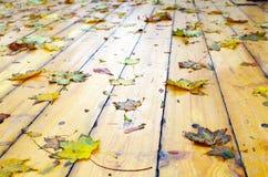 在湿下落的秋天槭树的选择聚焦留下特写镜头 库存照片