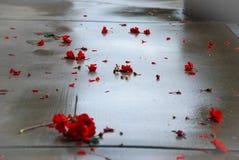 在湿具体人行道的红色大竺葵花 免版税库存照片