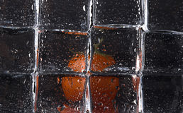 在湿冰块后的新鲜的蕃茄在黑背景 有选择性 库存图片