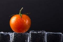 在湿冰块的新鲜的蕃茄在黑背景 有选择性的foc 库存照片