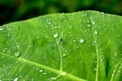 在湿叶子的一次飞行 库存照片