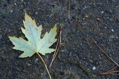 在湿地面的叶子在雨以后 免版税库存图片