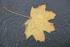 在湿地面的黄色叶子 库存照片