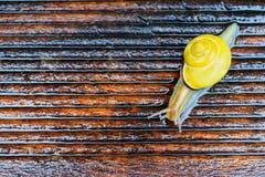在湿大阳台的蜗牛 免版税库存照片