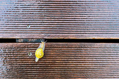 在湿大阳台的蜗牛 库存照片