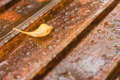 在湿木的黄色银杏树事假 免版税库存照片