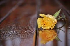 在湿木头的黄色玫瑰 关闭 库存图片