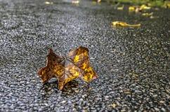 在湿柏油碎石地面的下落的叶子 图库摄影