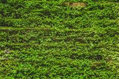 在湿气雨林纹理的青苔自然 免版税库存图片