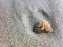在湿沙子的孤零零壳 库存照片