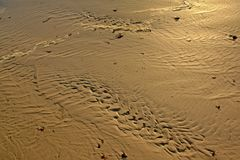 在湿沙子的波浪沙子样式在海滩 免版税库存图片