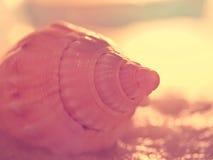 在湿沙子的海壳 免版税库存照片