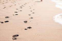 在湿沙子的脚印在马盖特海洋靠岸,南非 免版税库存照片