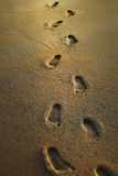 在湿沙子的脚印 库存照片