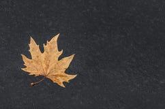 在湿沥青的黄色叶子 库存照片