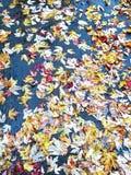 在湿沥青的黄色槭树叶子 库存照片