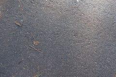 在湿沥青边路的下落的叶子 库存照片