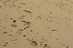 在湿海滩沙子的人的脚印 库存图片