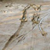 在湿混凝土的轮胎轨道 库存照片