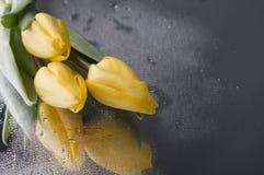 在湿灰色背景的春天黄色郁金香开花 免版税库存照片
