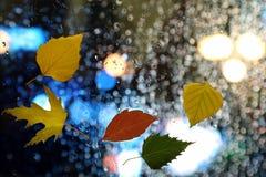 在湿玻璃的秋叶在多雨天气 库存图片