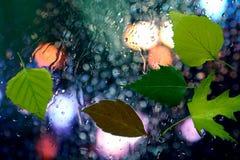 在湿玻璃的秋叶在多雨天气 免版税库存图片