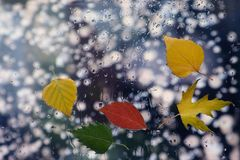 在湿玻璃的秋叶在多雨天气 库存照片