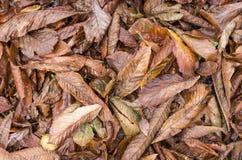 在湿的地面上的秋天干燥叶子 免版税库存图片