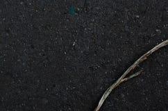 在湿石头的干燥分支 免版税库存图片