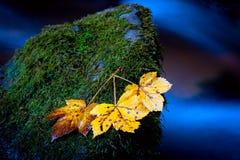 在湿石头的秋天leafage 免版税库存图片