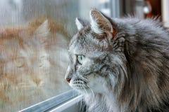 在湿窗口的猫 免版税库存图片